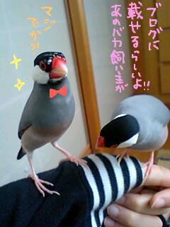 ナルちゃんサクラちゃん4.jpeg